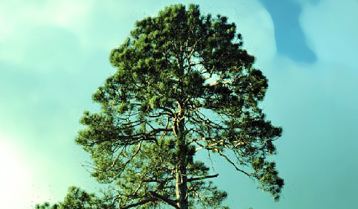 Virtual Red Pine Tree Spirit Medicine Workshop – Feb. 13, 2021